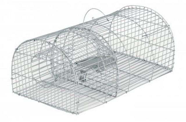 Testudinae preocupaci n ratas en el jard n tortugas for Ahuyentar ratas jardin