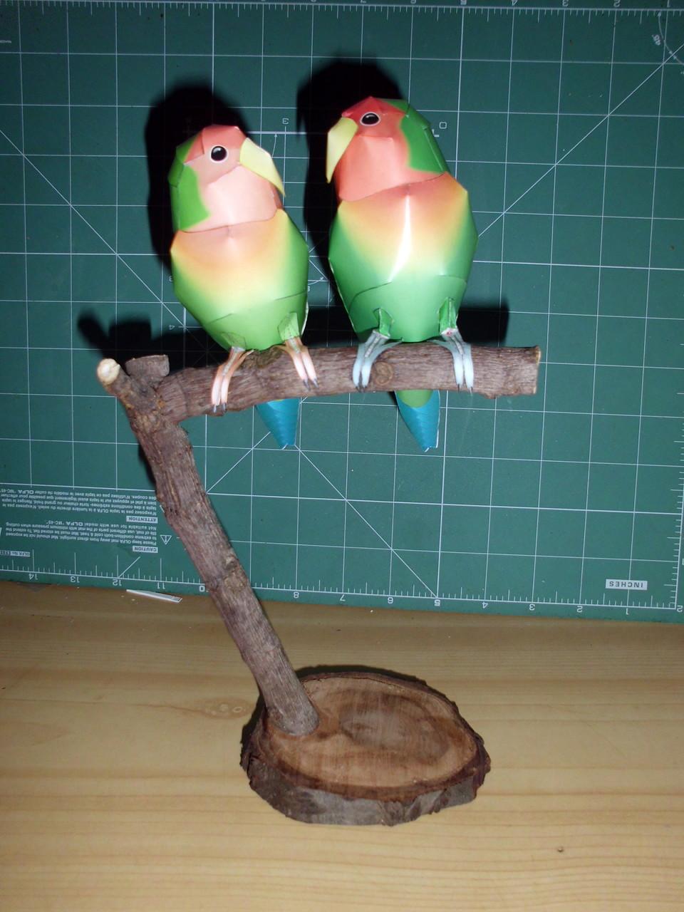 Aves del Amor (Agapurnis) de Canon 285B015B13215AAC4D69155AAC47D8