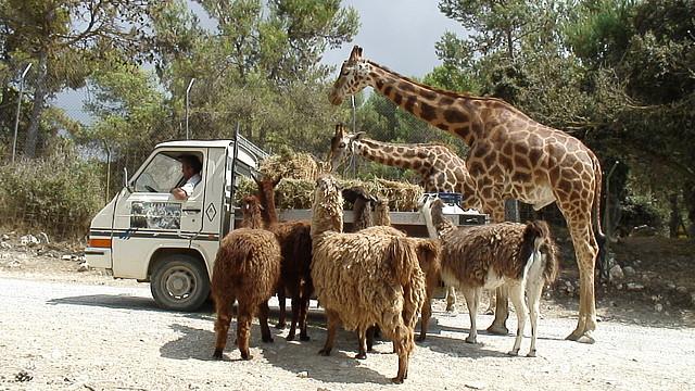 Сафари парк аликанте
