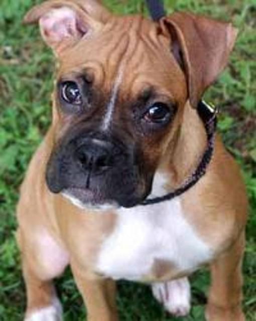 Amor a nuestros Perros