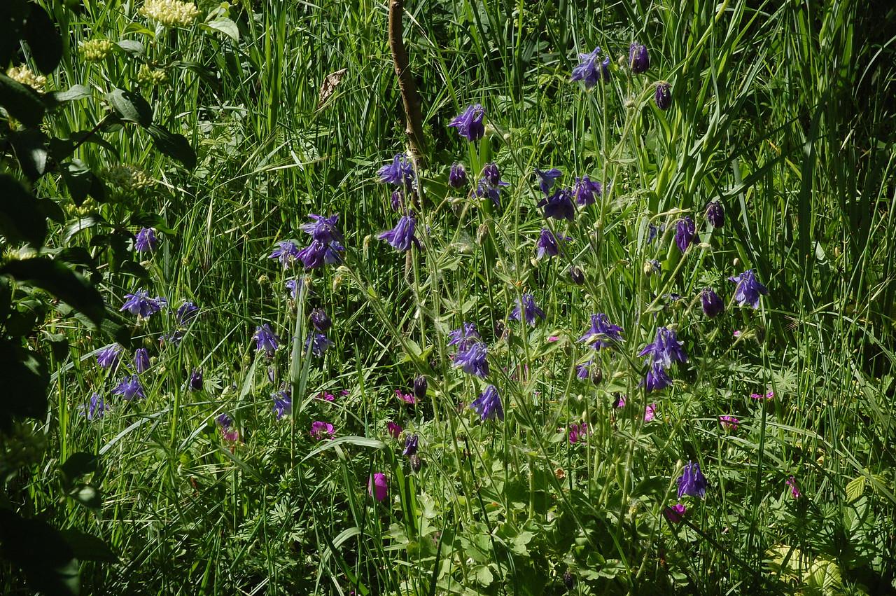 Repoblaci n aut ctona plantas herb ceas principal - Cortar hierba alta ...