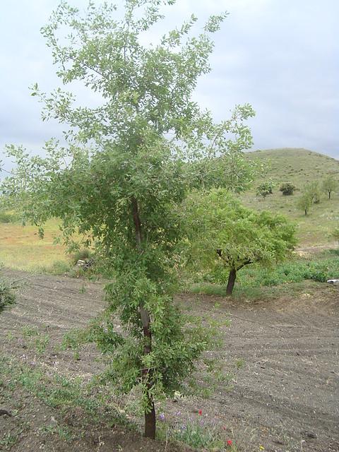 Repoblaci n aut ctona nuestras plantaciones principal for Plantaciones verticales