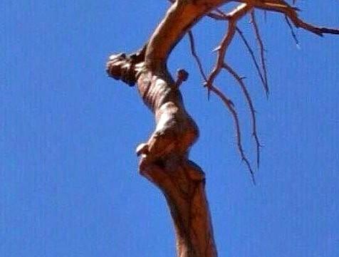 El arbol de jesus