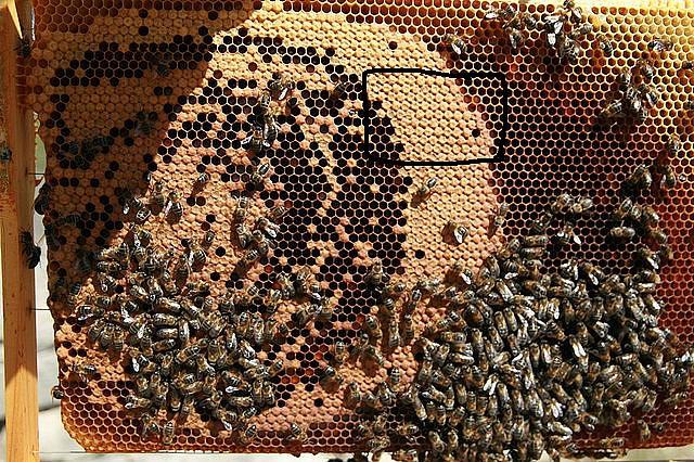 Resultado de imagen de foto cuadro cria y miel