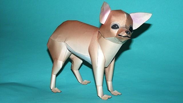 Perro Chihuahua (Canon) CONCLUIDO 264DB49114324D44EDBB304D44ED29