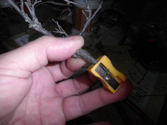 slot adictos   arboles baratos para decorar circuitos