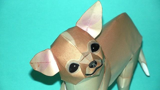 Perro Chihuahua (Canon) CONCLUIDO 2B4DB491072D4D44EDAD2C4D44ED1C