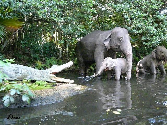 Im genes hd de elefantes bebe pictures to pin on pinterest - Fotos de elefantes bebes ...