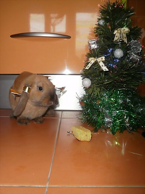 Presentaciones Feliz Navidad.Conejicos Feliz Navidad De Peke Chuky Y Pipi