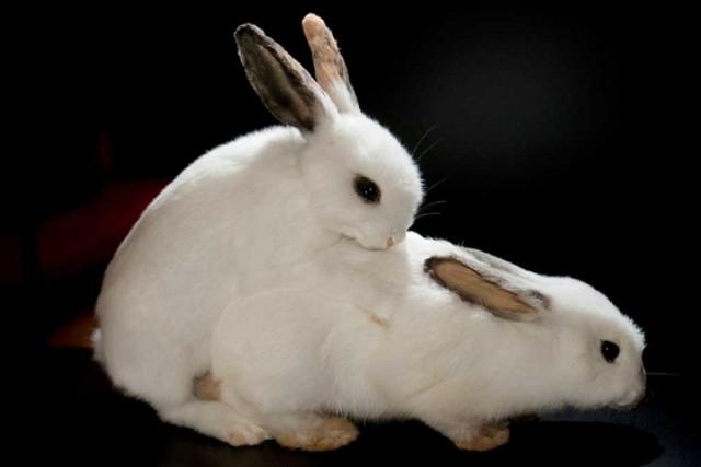 5 reproducci n reproduccion sexual y asexual - Imagenes de animales apareandose ...