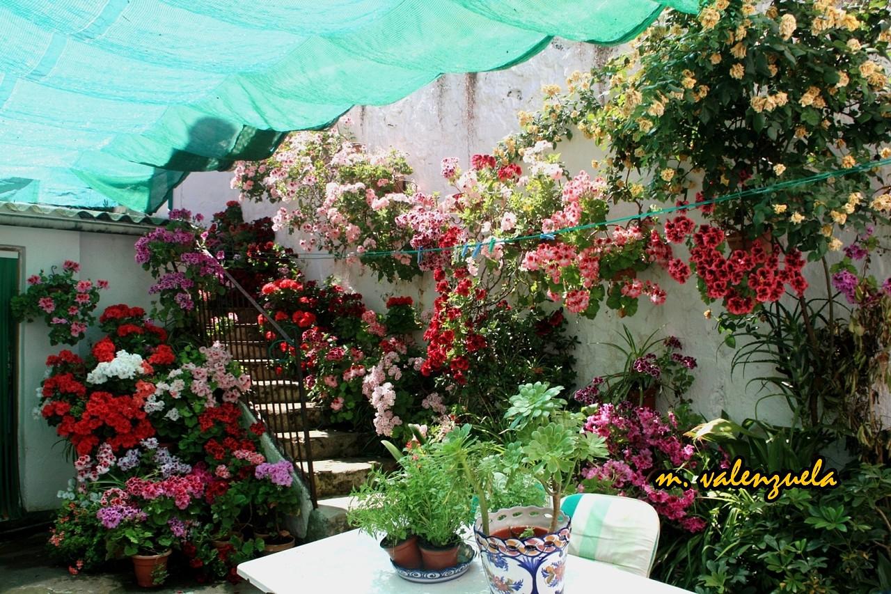 Navas de san juan la flor m s hermosa entre todas las - Patios con macetas ...