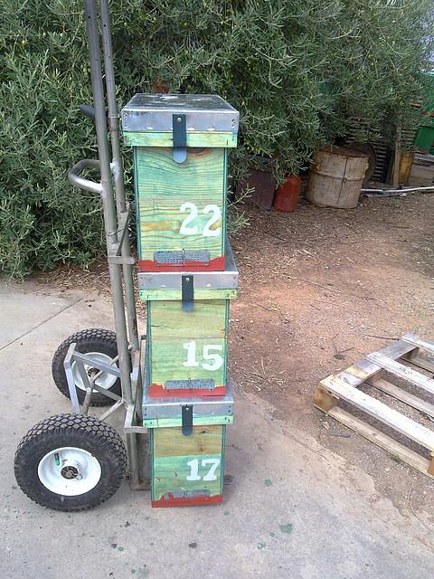 Comunidad de foros de Apicultura - Pintar colmenas - Chincheta taller