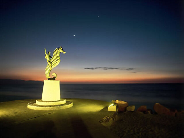 Caballito de mar Vallarta