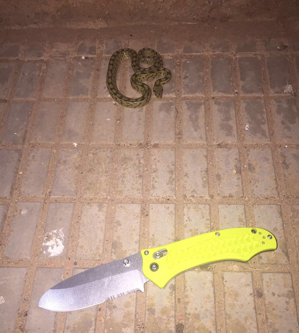 Cuchillos y navajas un lugar de reuni n que navaja for Brisa cuchillos