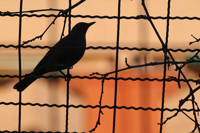 Zoos del mundo fauna salvaje dentro del zoo zool gic for Piso wellington barcelona