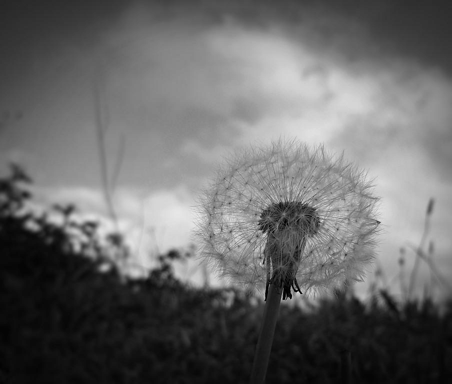 deseo dudas cicatrices tu boca piedras y desierto (que entre raíces crezca la hierba) (espacios en blanco blog)