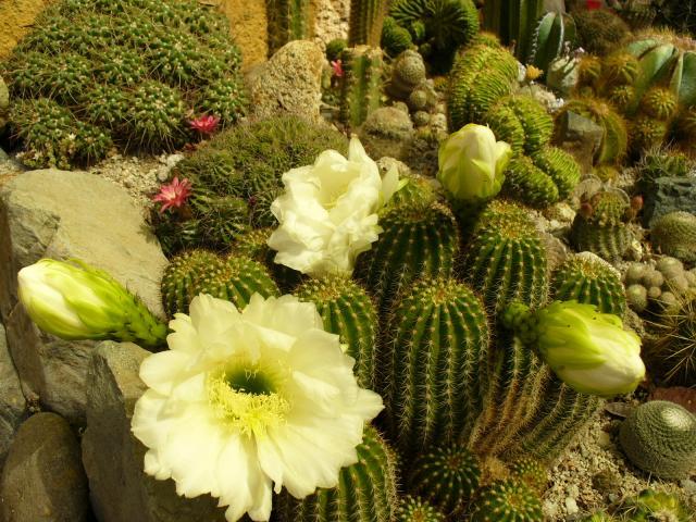 http://fotos.miarroba.com/fotos/1/3/13b013a9.jpg