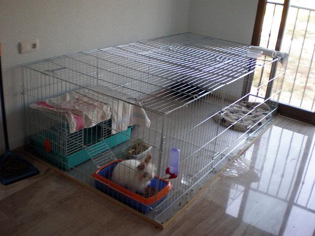 Foro conejos enanos alimentaci n cuidados preparando casa verano pepe informaci n - Casas para conejos enanos ...