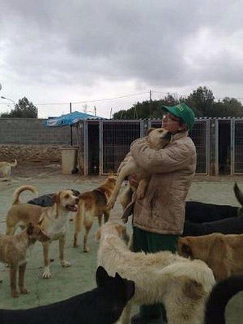 Ver tema mastin cachorritos pastores boxer husky caniche bodeguero - Perrera de vilafranca ...