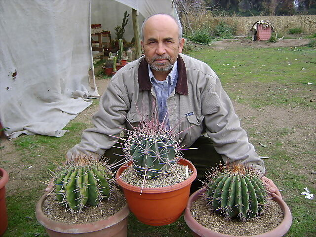 Eriosyce me hice un regalito cactus todos no chilenos for Vivero feroxcactus