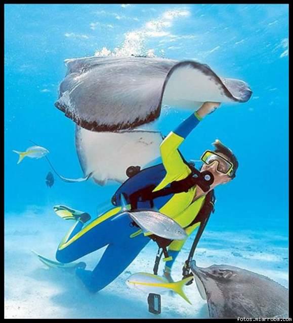 Un buceador nada con manta-rayas en las Islas Cayman.