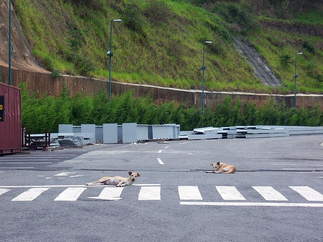 Caracas   Cocodrilos Sport Park   5.000 B588c958