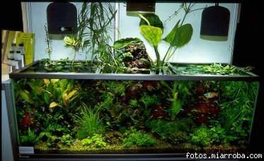 Vida mascota iluminaci n de los peces de acuario for Acuario comunitario