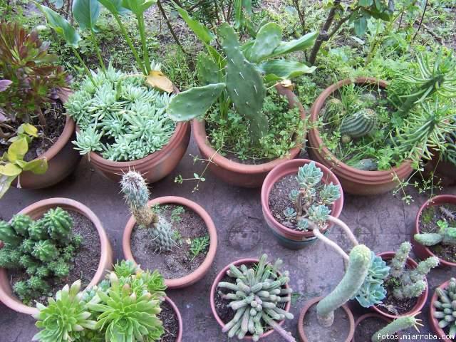 Fotos de mi coleccin de cactus infojardin auto design tech - Infojardin cactus ...