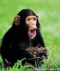 El año del mono