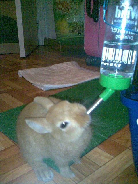 El rincon de los conejos ideas inventos y juguetes para nuestros cones alojamiento - Juguetes caseros para conejos ...