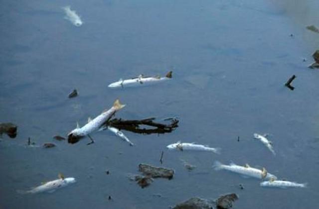 ozono21 Extincion de TRUCHAS