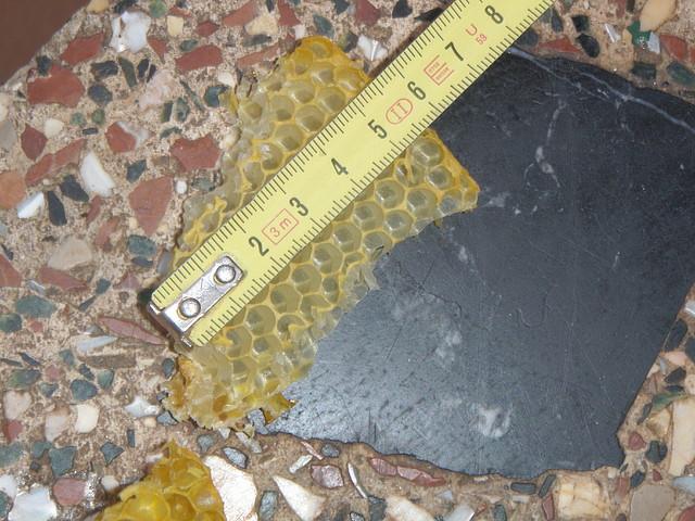 abejas 2011 009