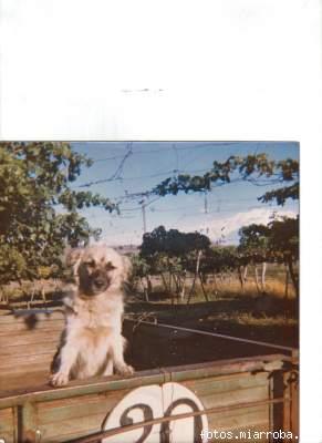 Perro en tractor y vista del parral