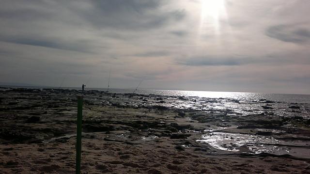 paloma_alta1