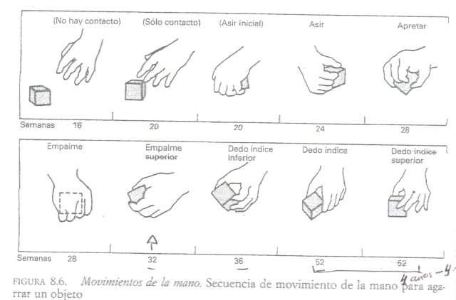 Secuencia de movimientos de la mano para agarrar un objeto