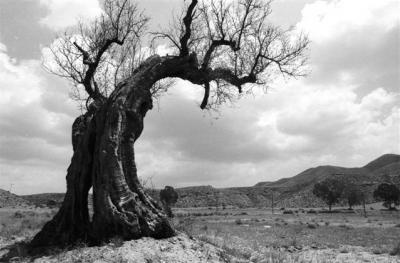 Árbol viejo Foto F. Medrano