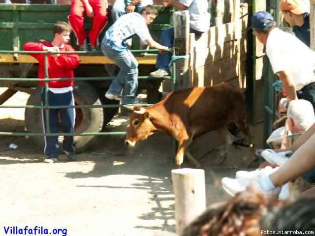 La vaquilla saliendo del toril
