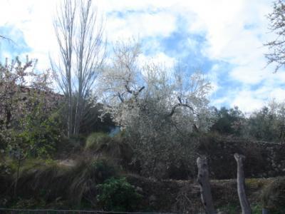 Benimantell, árboles