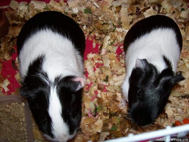 Betty y Lucy en caja
