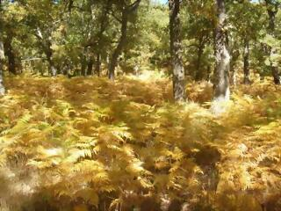 Muelas, Tijera, principios del otoño
