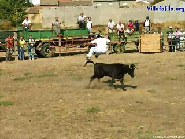 Salto de la vaquilla
