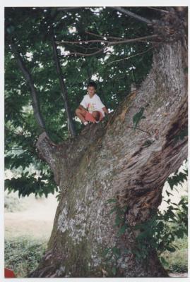 Dani en un castaño de Burbia, Foto M. Estrada