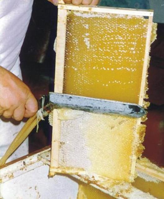 Corte de miel
