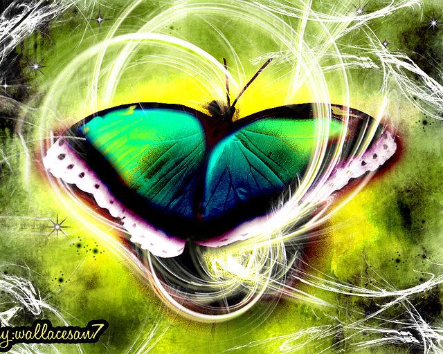 ????? borboleta-virtual