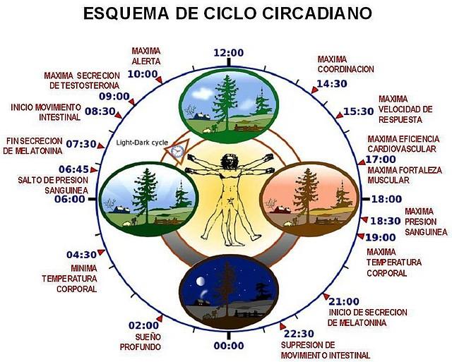 ciclo-circadiano