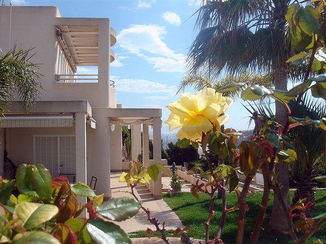 Una rosa amarilla. M. Estrada