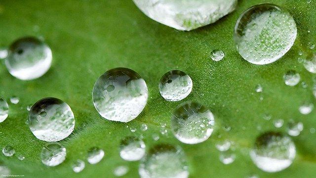 Leaf-Droplets-1