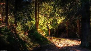 Lighted-Forest-1