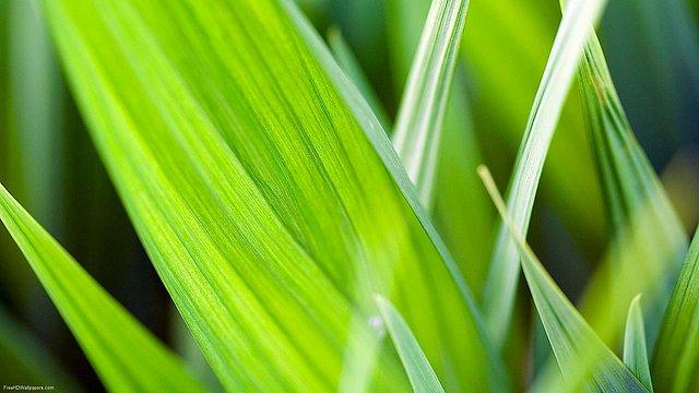 Leaf-Blades-1
