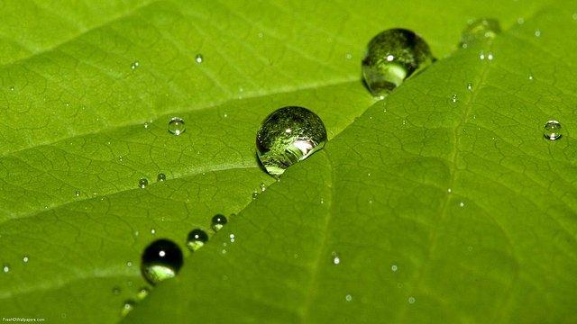 Aqua-Leaf-1